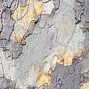Abstract Tree Bark II Art Print