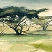 Acacia Art Print
