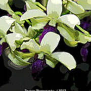 Accented Purple Poster Orchid Fx  Art Print