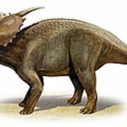 Achelousaurus Horneri, A Prehistoric Art Print