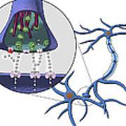 Action Of Serotonin Reuptake Inhibitors Art Print by Equinox Graphics
