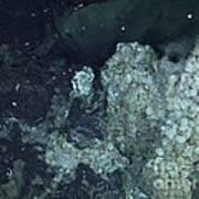 Active Hydrothermal Vent Art Print
