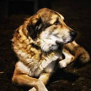 Adam - The Loving Dog Art Print by Bill Tiepelman