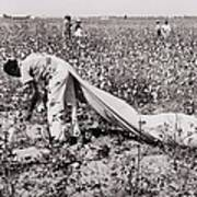 African American Day Laborer Picking Art Print by Everett