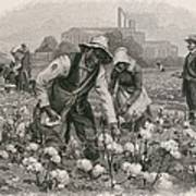 African Americans Pick Cotton Print by Everett