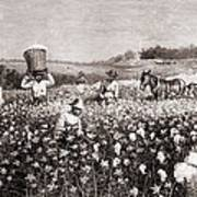 African Americans Picking Cotton Art Print by Everett