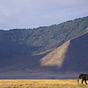 African Elephant In Ngorongoro Crater Art Print