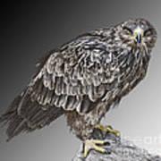 African Tawny Eagle Art Print