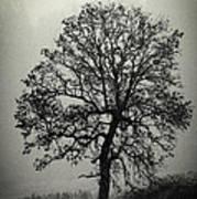 Age Old Tree Art Print