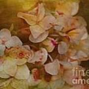 Aged Hydrangeas With Texture Art Print