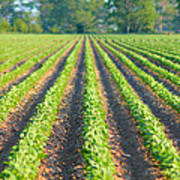 Agriculture-soybeans 5 Art Print