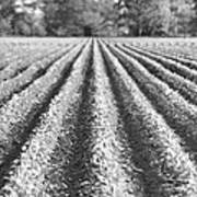 Agriculture-soybeans 6 Art Print