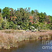 Alabama Bayou In Autumn Art Print