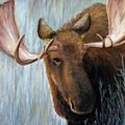 Alaskan Bull Moose Art Print