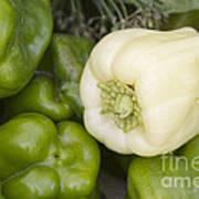 Albino Bullnose Pepper Art Print