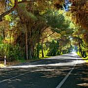 Albufera Road To El Palmar. Valencia. Spain Art Print