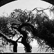 Alcatraz Tree Art Print by Ty Helbach