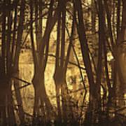 Alder Tree Marshland At Sunrise Art Print