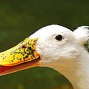 Alfalfa The Duck Art Print