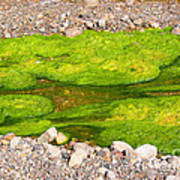 Algae Bloom Natural Abstract Art Of Nature Art Print