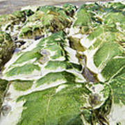 Algae Covered Rocks Art Print