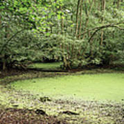 Algal Bloom In Pond Art Print by Michael Marten