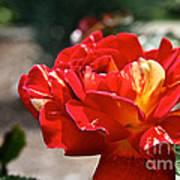 All American Magic Rose Art Print