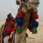 Camel Fashion Art Print
