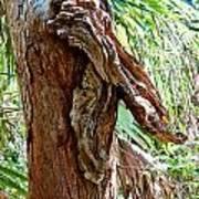 Alligator Cypress Knot Art Print