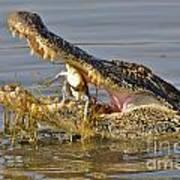 Alligator Get Lunch Art Print