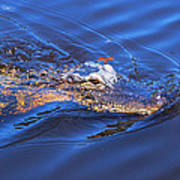 Alligator In Mississippi River Art Print