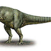 Allosaurus Fragilis, A Prehistoric Era Art Print
