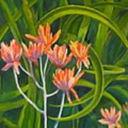 Aloe Swirl Art Print