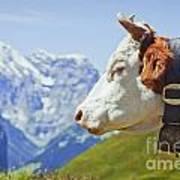 Alpine Cow Art Print by Greg Stechishin