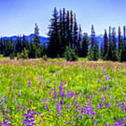 Alpine Meadow V At Mount Rainier Art Print