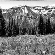 Alpine Meadow Viii At Mount Rainier Art Print