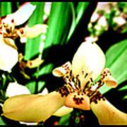 Always Orchids Art Print