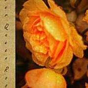 Amber Queen Rose Art Print