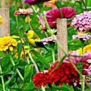 American Goldfinch In The Garden Art Print