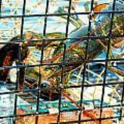 American Lobster In Trap In Chatham On Cape Cod Art Print
