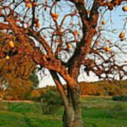 American Persimmon Tree Art Print