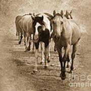 American Quarter Horse Herd In Sepia Art Print