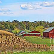 Amish Cornfield Art Print