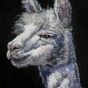 Amorous Alpaca Art Print