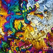 Ampicillin Lm Art Print
