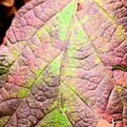 An Autumn's Leaf Art Print