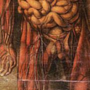 Anatomie Generale Des Visceres Art Print
