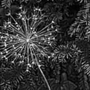 Anatomy Of A Flower Monochrome 2 Art Print
