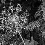 Anatomy Of A Flower Monochrome Art Print