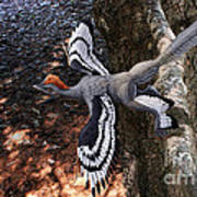 Anchiornis huxleyi  Art Print